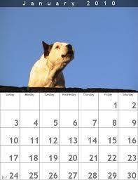 January calendar dog