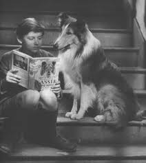 Lassie reading