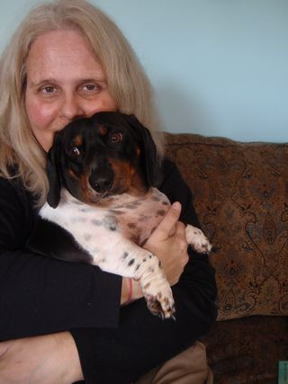 Chrystle Fiedler and Wallander her Detective Dachshund #1