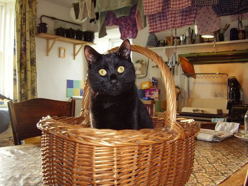 Dennis in basket