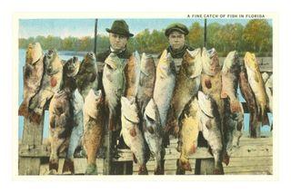 Fish-catch-florida