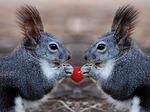 Squirrel-112727_150