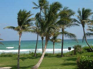 Beach-w-palm-trees