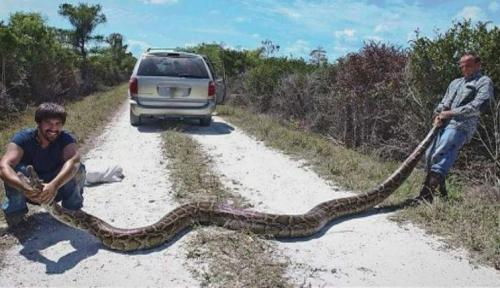 Python catcher