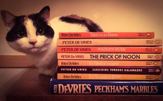 DeVries Books with Cat