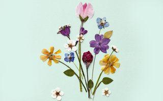 Pressed-flowers-ftr