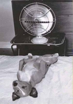 IC+dog+in+front+of+fan