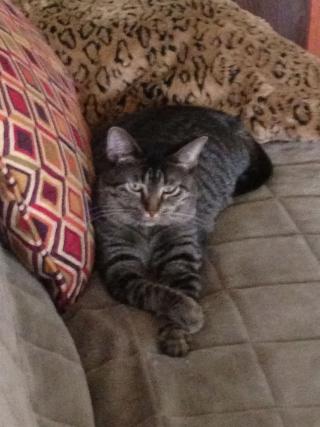 Julies cat