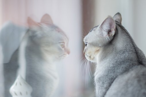 Mirror and cat